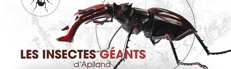 Les insectes géants