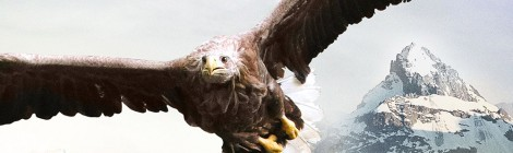 FREEDOM, an eagle takes flight