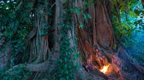 Frères des arbres – L'appel d'un chef papou