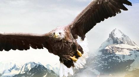 FREEDOM, an eagle takes flight