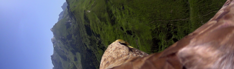 Du point de vue d'un aigle, au Muséum d'histoire naturelle de toulouse